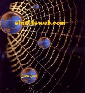 spiderwebjpeg2